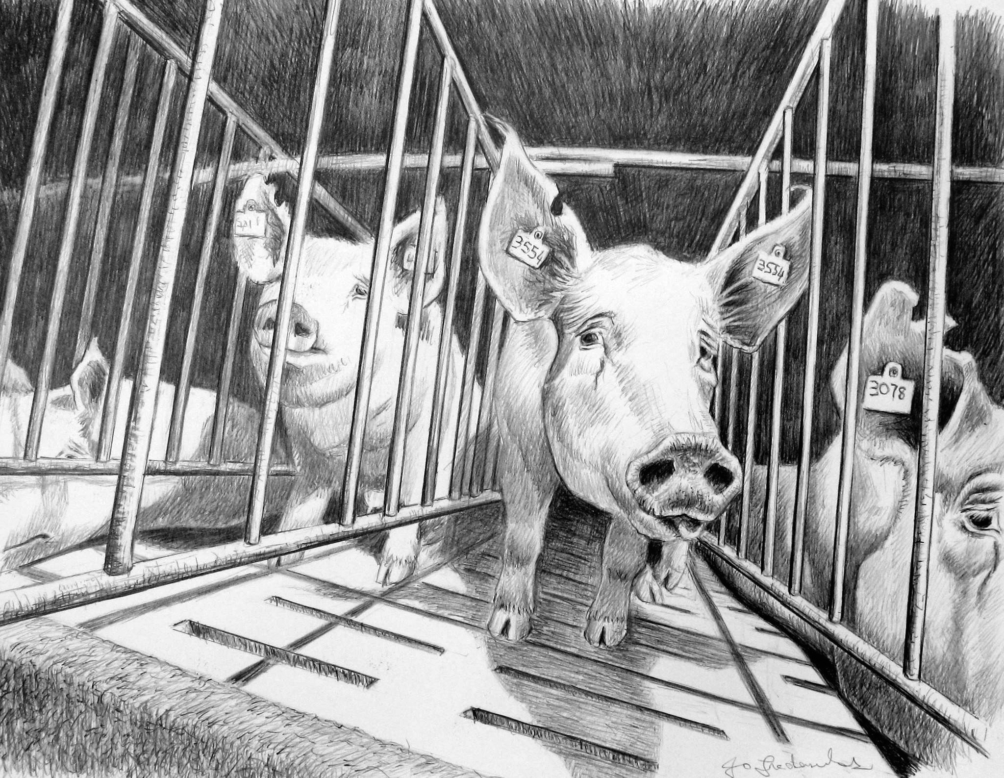 Jo Frederiks - Factory Farming: Industrialised Cruelty
